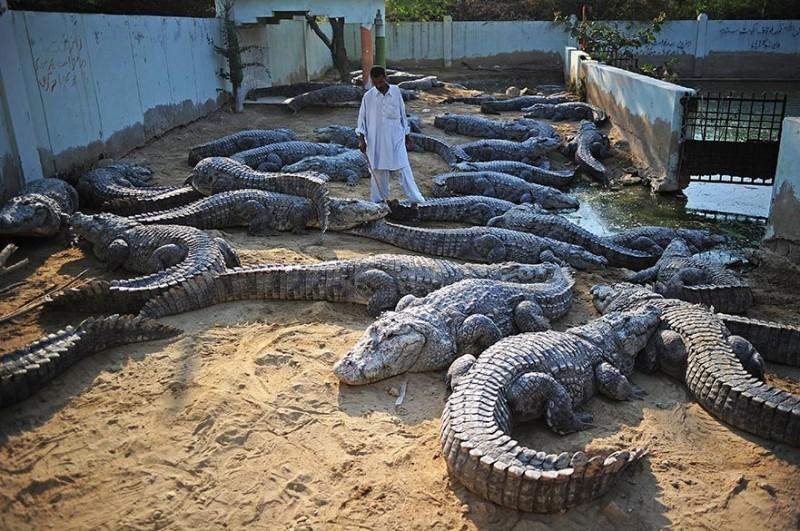 Lovely Karachi Zoo