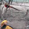 Bird Aviary 3