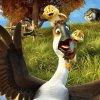 Duck Duck Goose 001