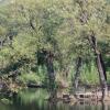 Ayub National Park 8
