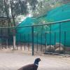 Bird Aviary 7