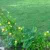 Nazeer Hussain Park 14