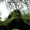 Ayub National Park 2