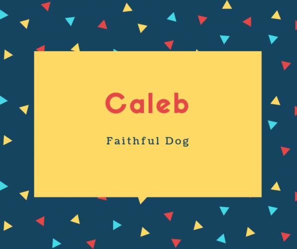 Caleb Name Meaning Faithful Dog