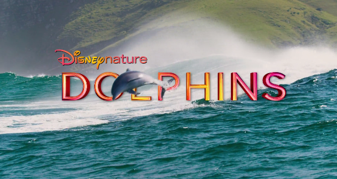 Dolphins 001