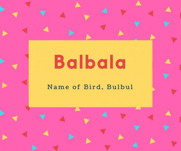 Balbala Name Meaning Name of Bird, Bulbul