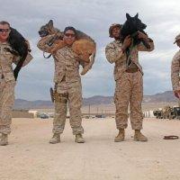 War Dogs 9