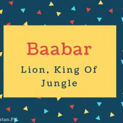 Baabar Name Meaning Lion, King Of Jungle
