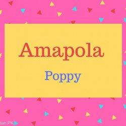 Amapola Name Meaning Poppy.