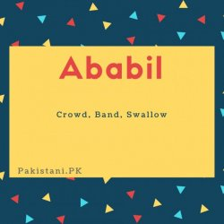 Ababil name meaning Crowd, Band, Swallow.