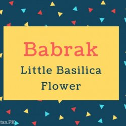 Babrak Name Meaning In Little Basilica Flower