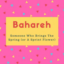 Bahareh Name Meaning Someone Who Brings The Spring (or A Sprint Flower)