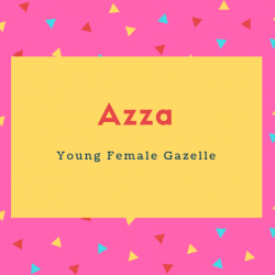 Azza Name Meaning Young Female Gazelle