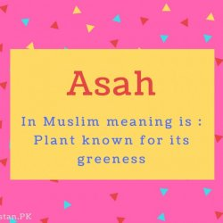 Asah name Meaning In Muslim meaning is - Plant known for its greeness.