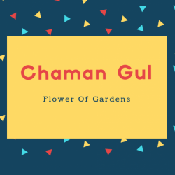 Chaman Gul Name Meaning Flower Of Gardens