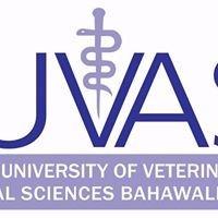 Cholistan University of Veterinary and Animal Sciences
