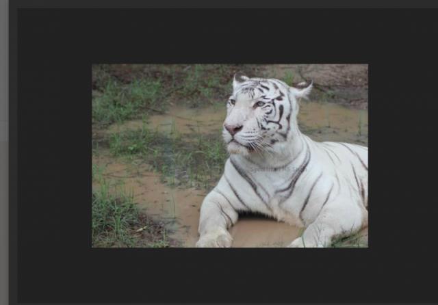 Lahore Zoo Sifari